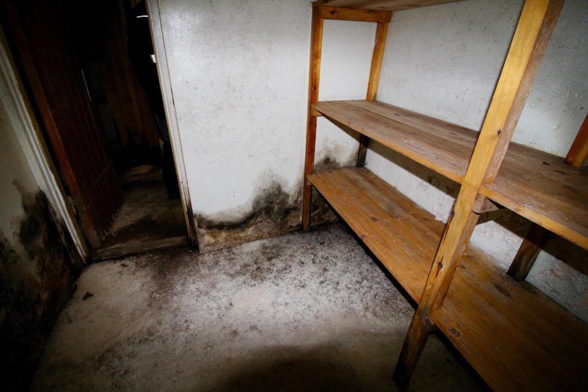 Angrepp av skadesvamp (röta) i källare