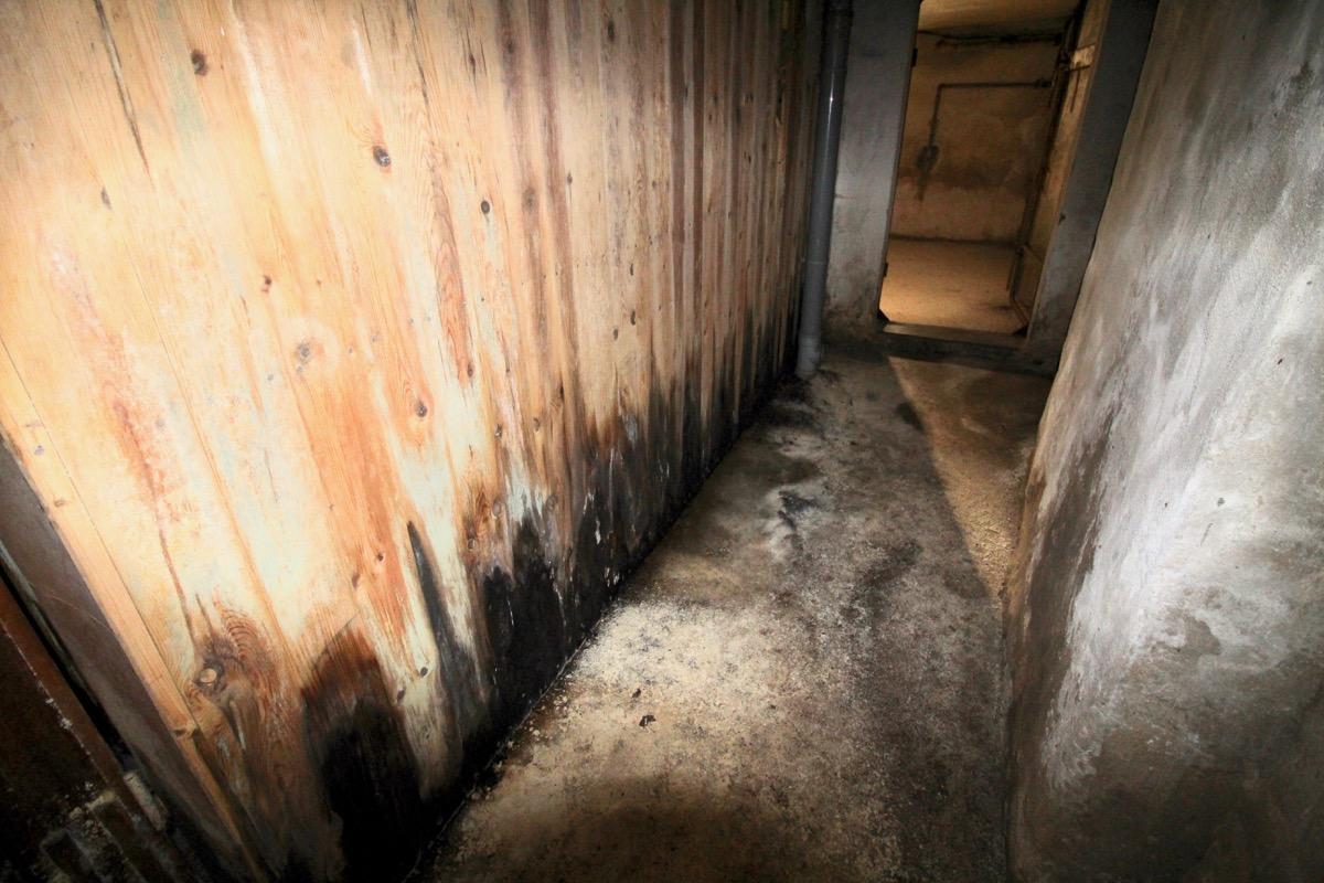 Kraftig angrepp av skadesvamp (röta) i källare